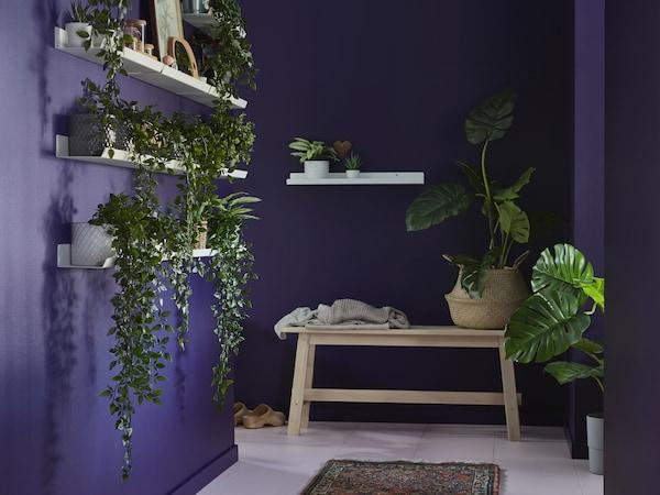 غرفة بها جدران أرجواني، مع مقاعد خشبية ورفوف بيضاء عليها أواني نباتات اصطناعية FEJKA.