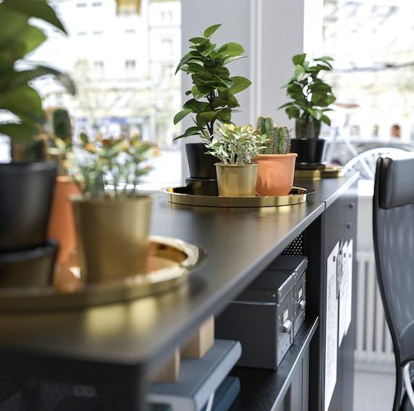 GLATTIS صواني تقديم ذهبية من ايكيا مع مجموعة من أوعية نباتات العصاري، على رأس وحدة تخزين سوداء.