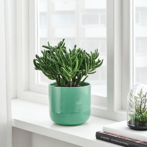 gradvis sierpot groen met plant er in getoond