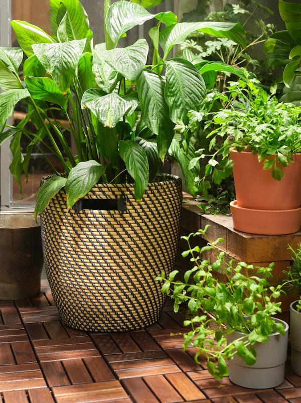 Grande pianta all'interno di un portavasi RÅGKORN su pedane da esterno RUNNEN in legno, circondata da piante più piccole a diverse altezze.