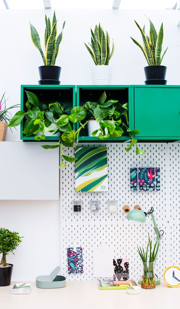 Green cube wall cabinets filled with plants