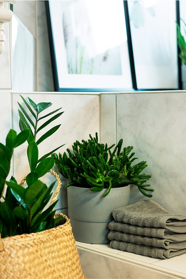 Green IKEA plants in the bathroom, with IKEA basket and IKEA flower pot.