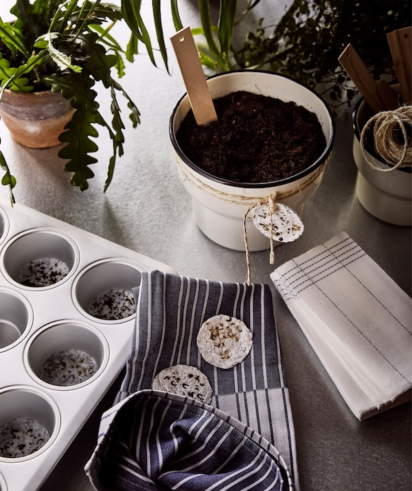 Green plants, home-made plant pods in a muffin tin and beige plant pot gifts with home-made seed pods tied around them.