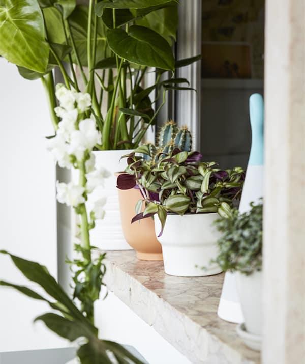 Gros plan d'une rangée de plantes en pot sur un rebord de fenêtre.