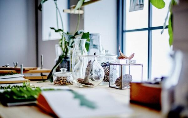Gros plan sur des plantes et autres végétaux déposés sur un bureau placé devant une fenêtre.