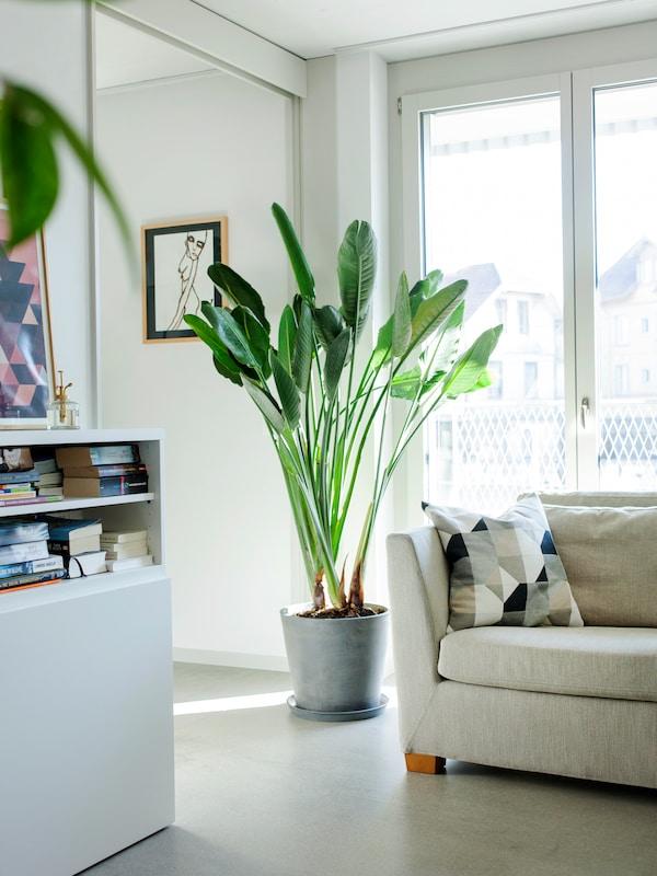 Grosse IKEA Pflanzen sorgen für eine natürlich schöne Stimmung in deinem Zuhause.