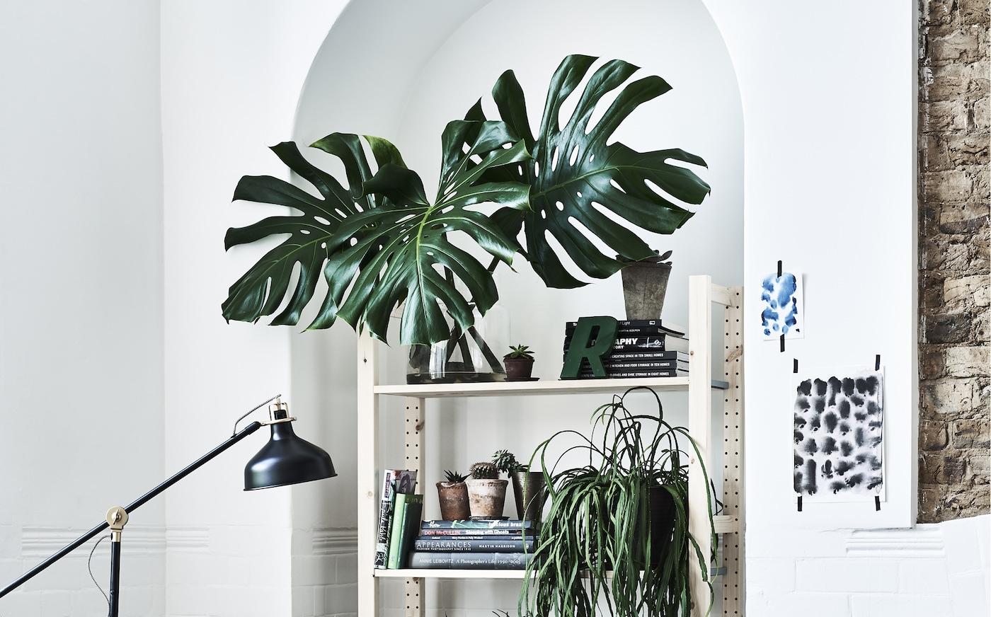 حائط أبيض عليه رفوف ونباتات اصطناعية.