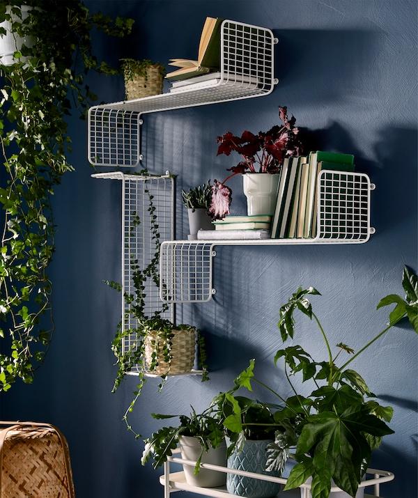 حائط مع نباتات معروضة بطرق مختلفة: معلقة من أعلى، وعلى رفوف جدارية مع الكتب، وعلى حامل نباتات.