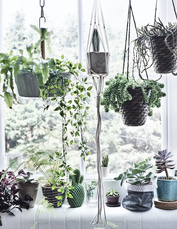Hanging and potted plants in a window.