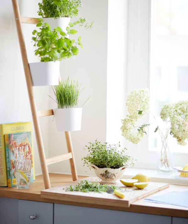 Herbs growing in pots on a ladder plant stand on a wooden worktop, near a window.