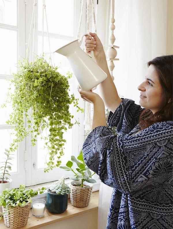 Hol dir Andreias Pflanzenpflegetipps, u. a. für ALOE VERA Pflanze Aloe Vera