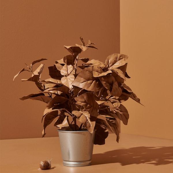 I et lysebrunt miljø står en potteplante med farvede, lysebrune blade i en metalpotte.