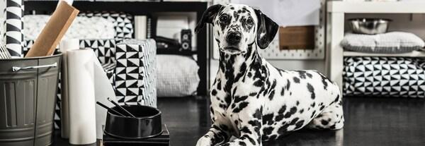 Idées cadeaux - Amis des animaux