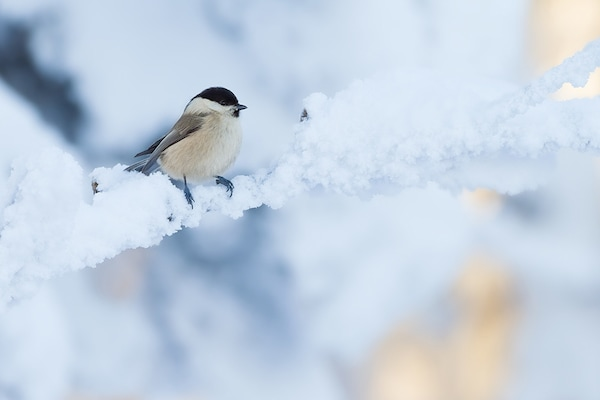 Ikea Cb Vogelfuetterung 6
