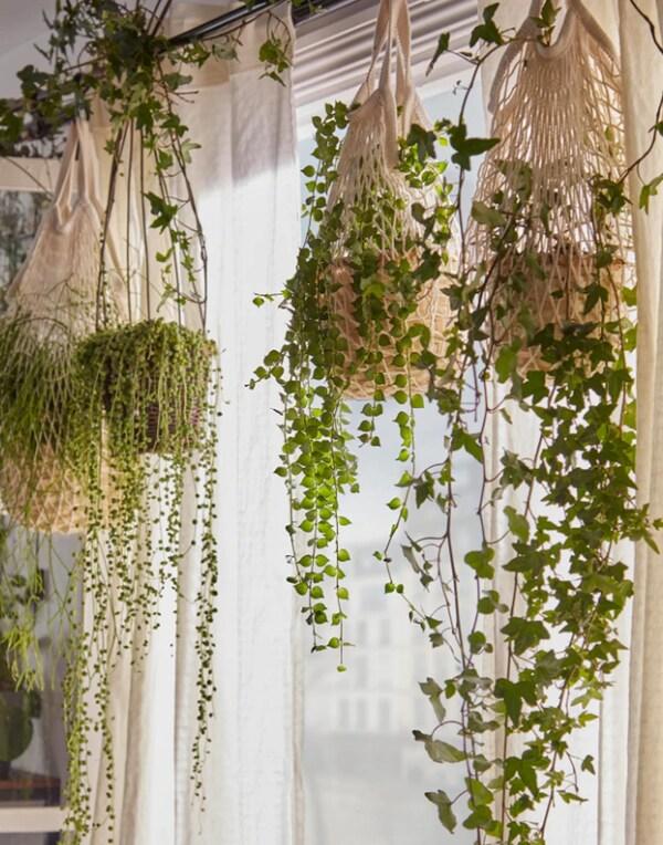 IKEA KUNGSFORS verkkopusseihin on tehty amppelit roikkuville kasveille, jotka on ripustettu verhotangosta.