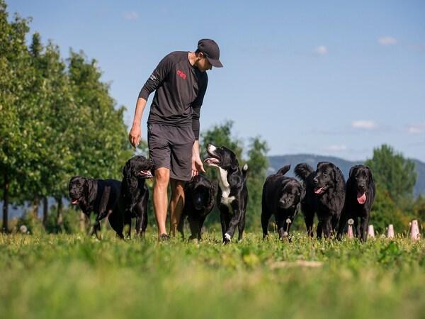 IKEA Québec participe au Programme de récupération de cartouches pour le dressage de chiens Mira