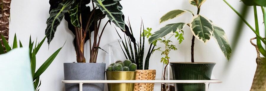 IKEA salon met rotan zetels, een rotan mand, een plantenstandaard en heel veel planten.
