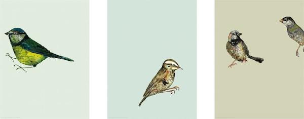 ikea vogels posters