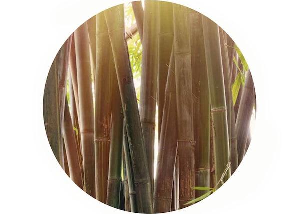 Il bambù è un materiale bello, durevole e rinnovabile - IKEA
