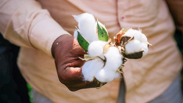 Image of hands with cotton