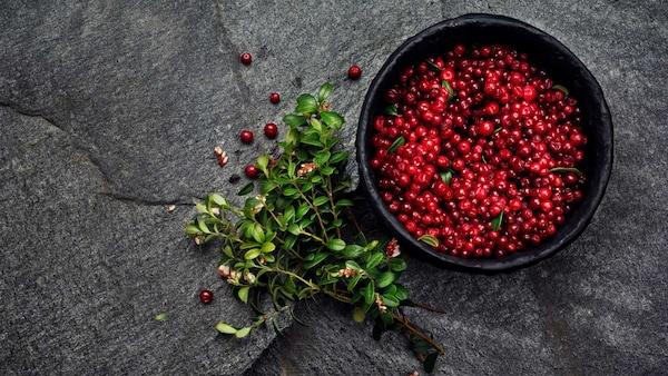Image of lingonberry organic food