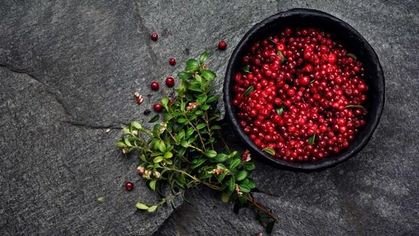 Imej lingonberi makanan organik