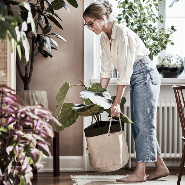 Împrospătează aspectul casei tale cu ajutorul plantelor