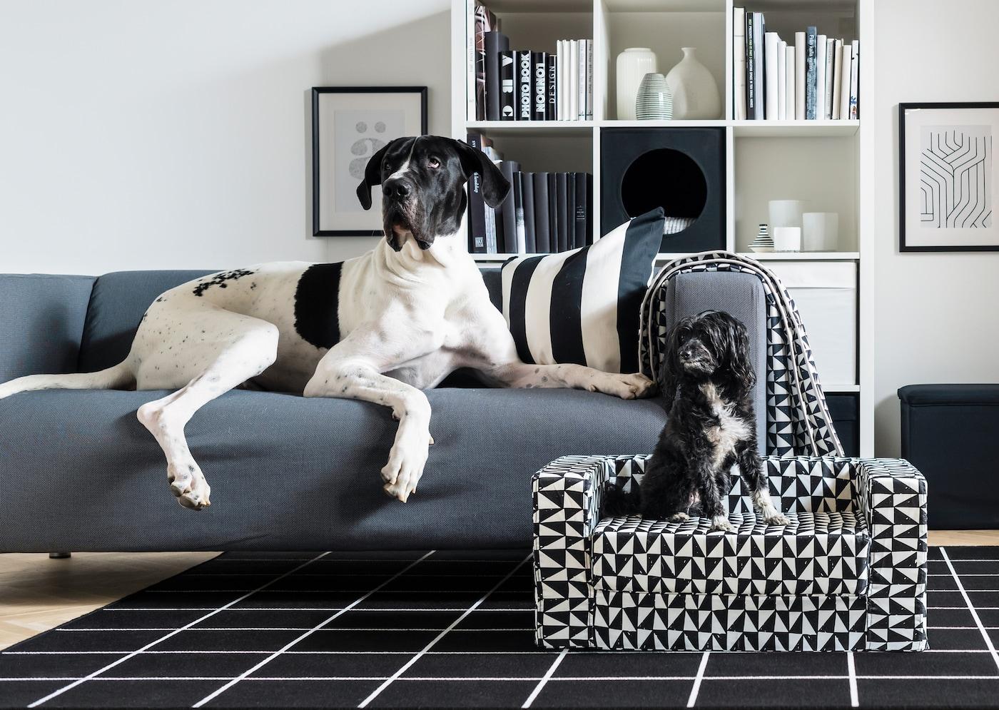 In einem Wohnzimmer liegt eine grosse Deutsche Dogge auf einem KLIPPAN Sofa, daneben sitzt ein kleiner schwarzer Hund auf einem LURVIG Hundebett.