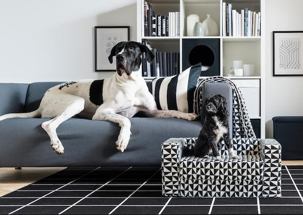 In soggiorno un Danese è sdraiato su un divano KLIPPAN, mentre accanto a lui un piccolo cane nero è seduto su una cuccia per cani LURVIG - IKEA