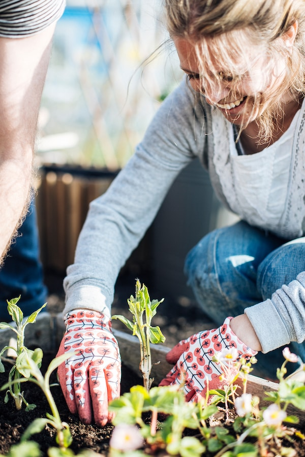 Inneneinrichterin Emilia pflanzt Artischocken und trägt dabei KRYDDNEJLIKA Gartenhandschuhe in Rot