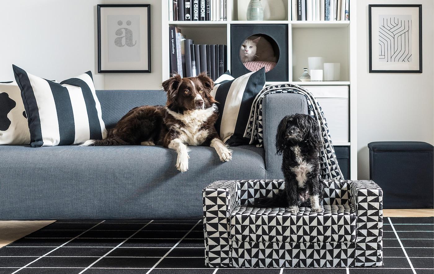 Intérieur d'une salle de séjour, un chien couché sur un canapé, un autre sur un canapé pour chien, un chat qui sort la tête d'une maison pour chat placée dans une bibliothèque.