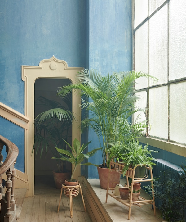 Interno in stile rustico decorato in modo raffinato. Ampie finestre e piante, di cui alcune nel piedistallo per piante BUSKBO - IKEA
