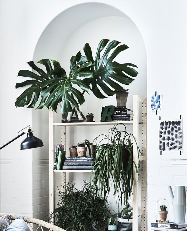 IVAR 1 Elem/Böden Kiefer in einer Ecke mit Pflanzen und Büchern