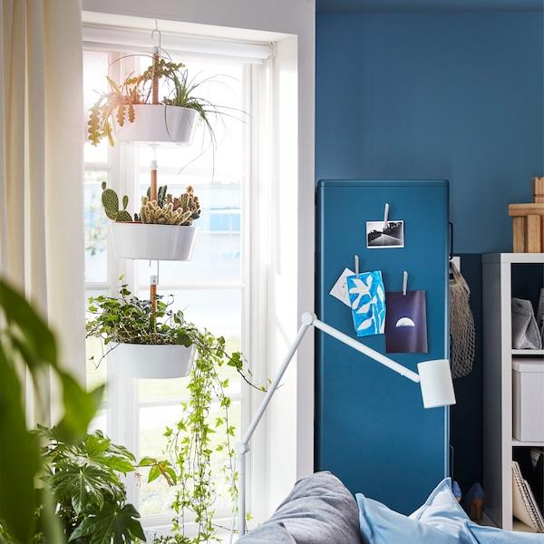 Janela da sala rodeada de muitas plantas verdes. Floreira suspensa BITTERGURKA pendurada em frente à janela.