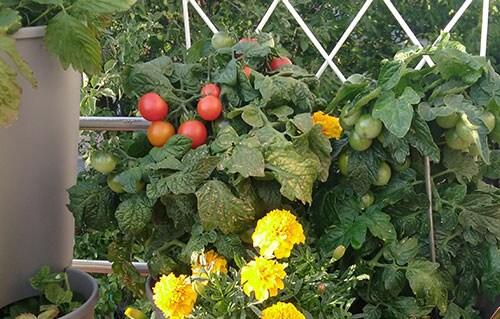 Jeśli chcesz być szczęśliwy przez całe życie - załóż sobie ogród