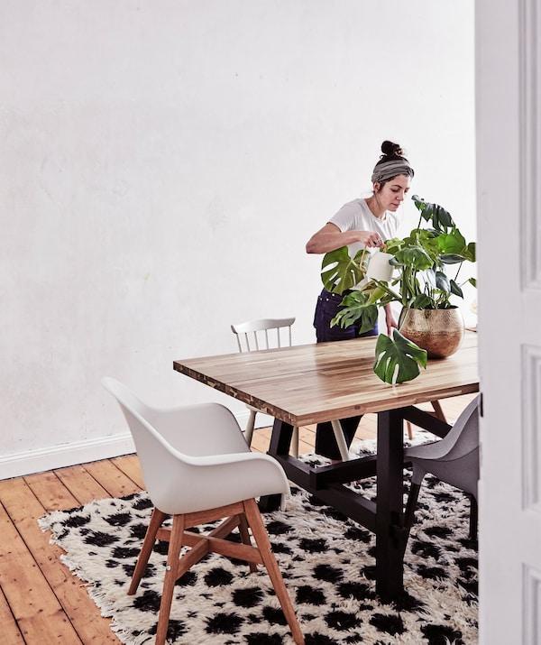 Julia podlewająca monsterę na dużym drewnianym stole z krzesłami stojącymi wokół, obok nagiej ściany.