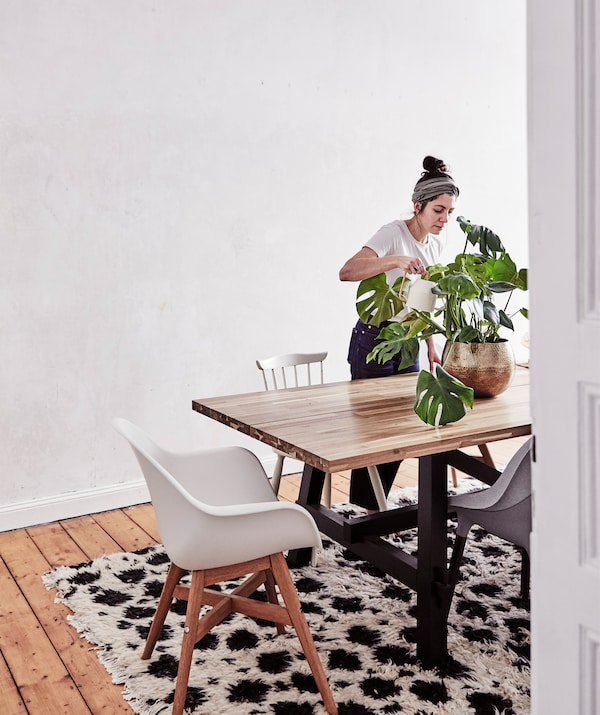 Julia watering a plant on a large wooden table with chairs around it, next to a bare wall.