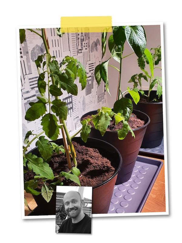 Kahden kuvan kollaasi: Isossa kuvassa BAGGMUCK-kenkämatolle asetelluissa FNISS-roskakoreissa viherkasveja mullassa. Pikkukuvassa mustavalkoinen kasvokuva IKEA-työntekijästä.