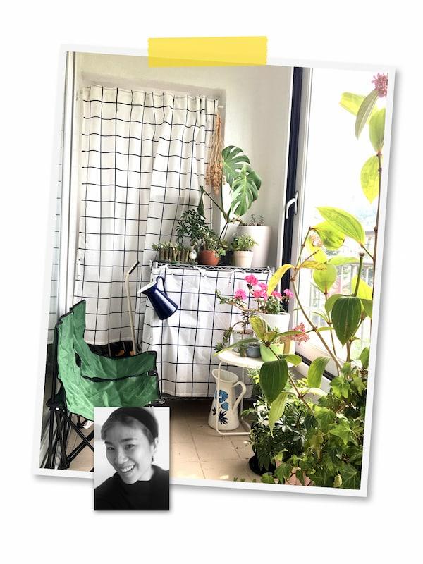Kahden kuvan kollaasi: Isossa kuvassa kasveja täynnä oleva huone, jossa hyllyt on peitetty ruutukuvioisella kankaalla. Pikkukuvassa mustavalkoinen kasvokuva IKEA-työntekijästä.