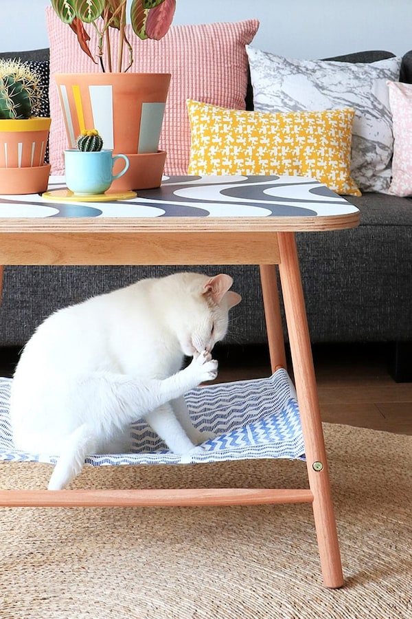 Kat in hangout onder salontafel