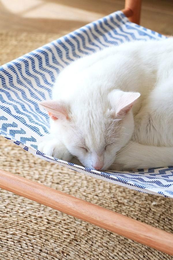 Kat slapend in een hangout onder tafel