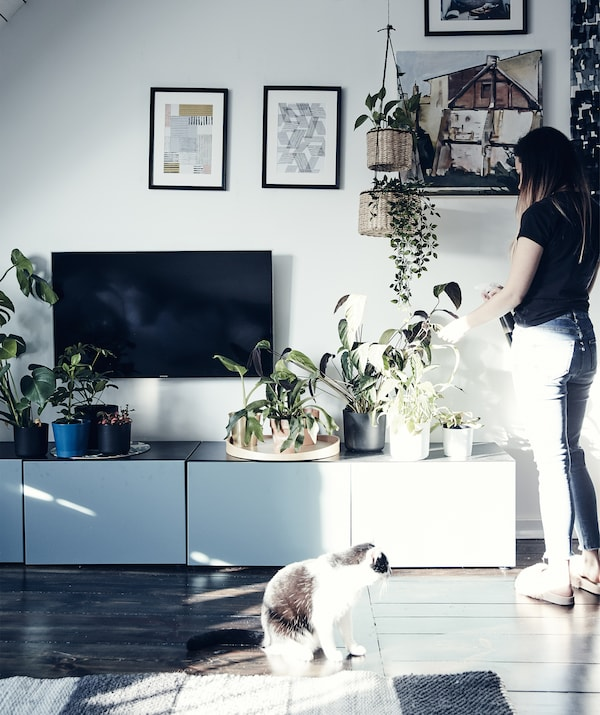 Katarzyna îngrijind plantele pe o unitate de depozitare TV joasă din sufragerie.