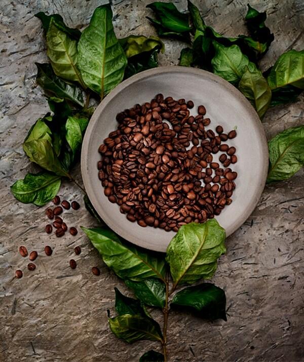 Keramički tanjir u mat sivoj nijansi, napunjen celim, pečenim zrnima kafe. Činija postavljena na tanku granu, s poluosušenim listićima.