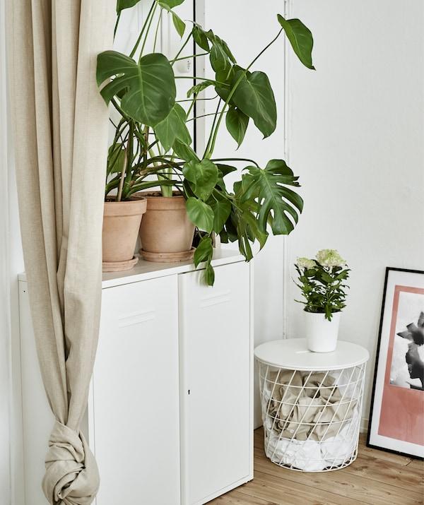 خزانة معدن بيضاء، وطاولة تخزين ونباتات.