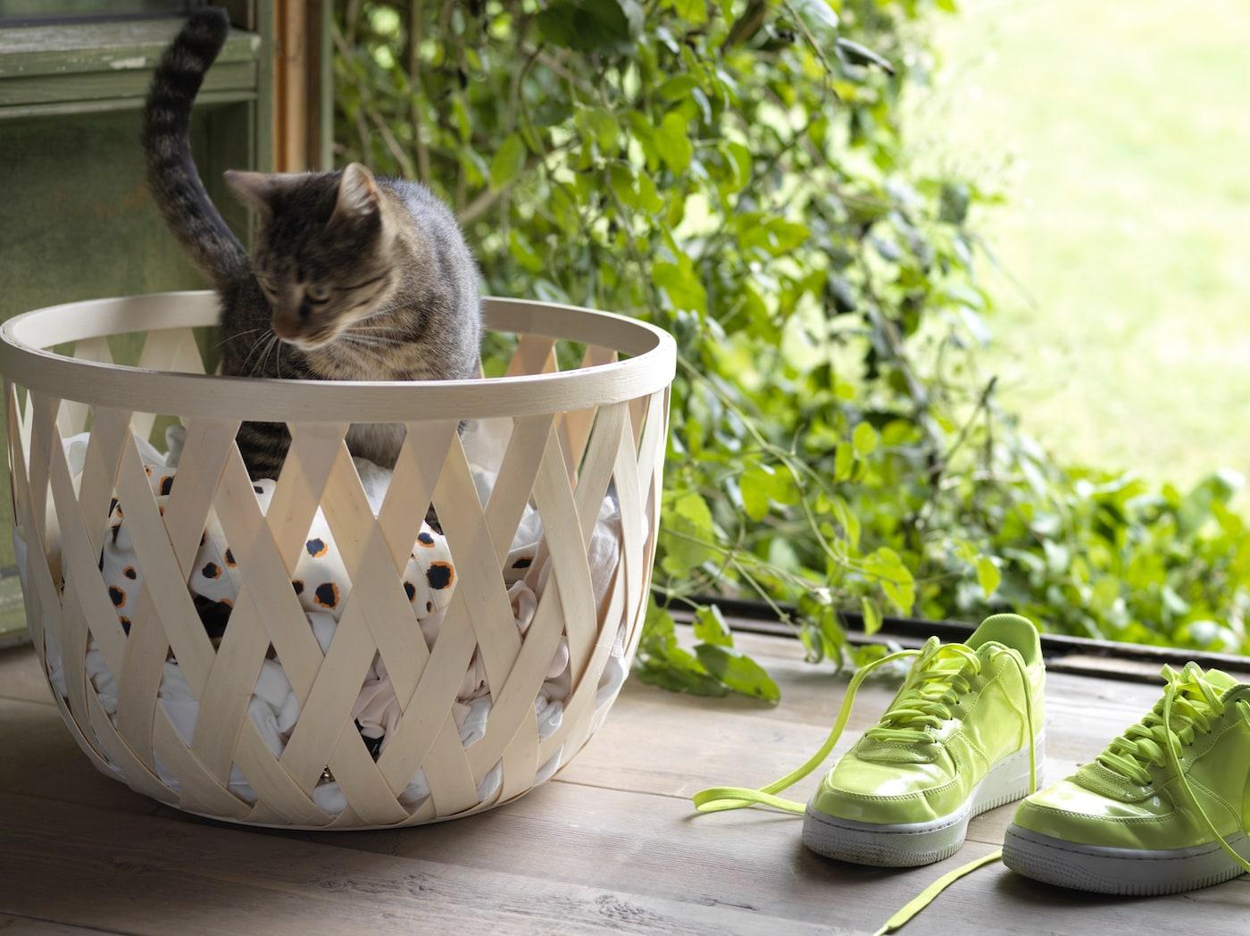 Kissanpentu seisoo TJILLEVIPS korissa, joka on täynnä pyykkiä. Vieressä ovat neonvihreät lenkkarit.