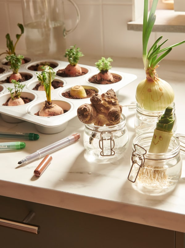 Kitchen worktop with vegetable shoots: some in soil in a VARDAGEN muffin tin, others in water in KORKEN jars.