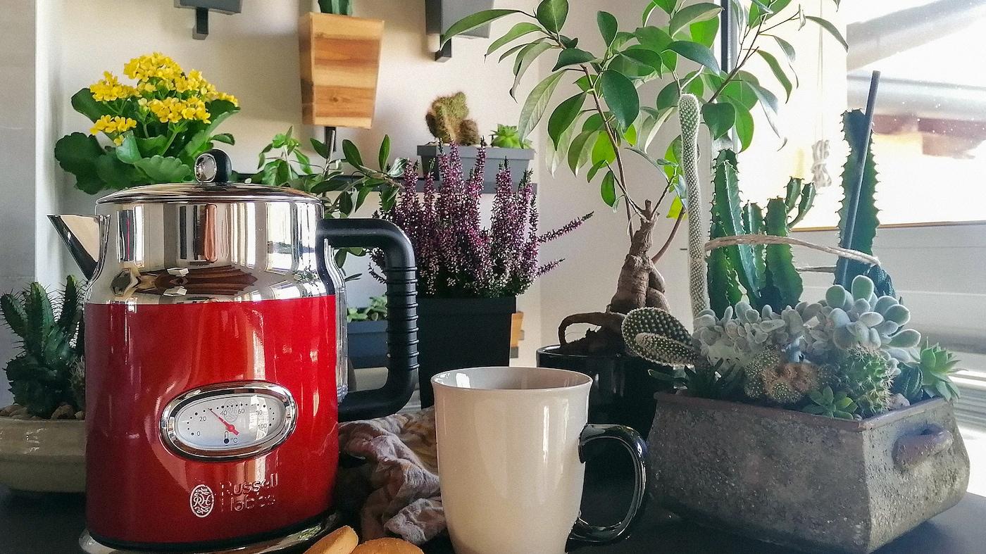キッチンのカウンタートップの上に置かれたレッドのケトル、オフホワイトのマグ、さまざまな鉢植え。