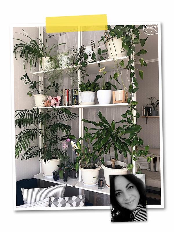 Kolaž dve slike: ELVARLI element pregrađuje sobu od poda do plafona, sa zelenim biljkama, i slika IKEA zaposlenog.