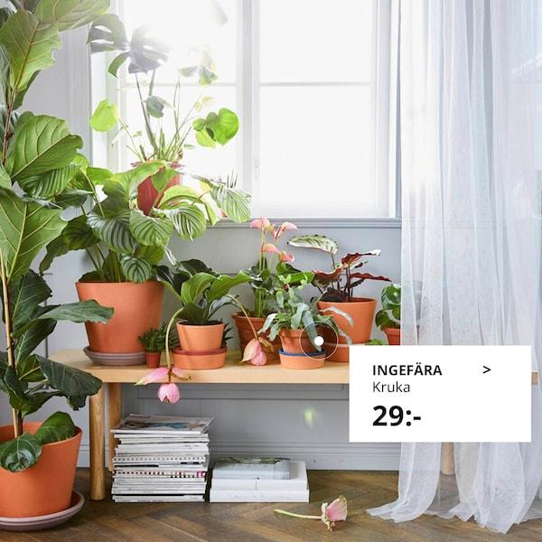 Kom igång med inomhusväxter.