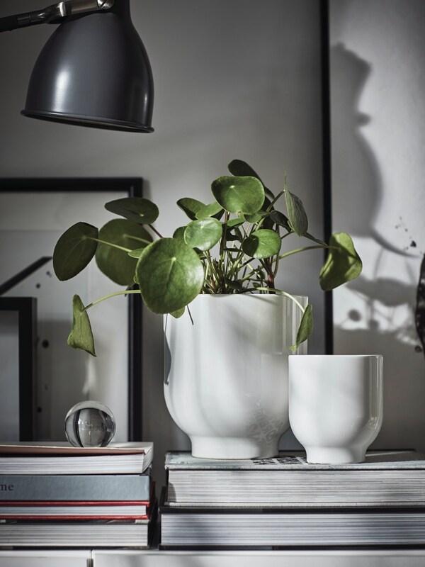 Kombinacija visećih i saksijskih biljaka na praznom prozorskom oknu između dve bele prostorije.
